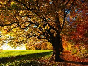Bien commencer l'automne avec la naturopathie